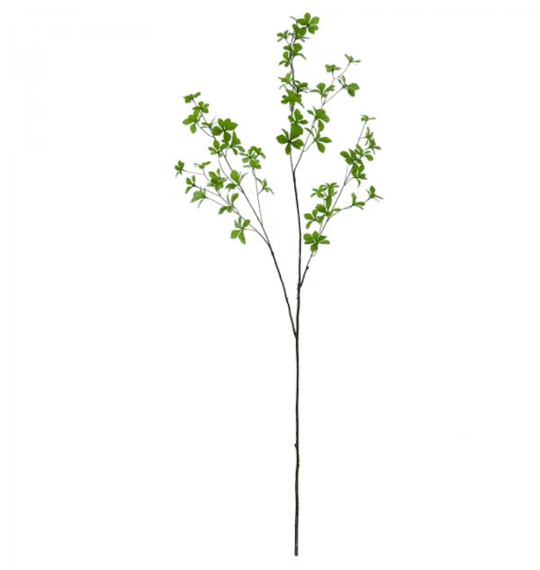 ドウダンツツジ グラスグリーン 単品花材
